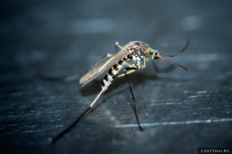 Комар - переносчик лихорадки Денге