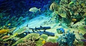 Аквариум «Подводный мир»