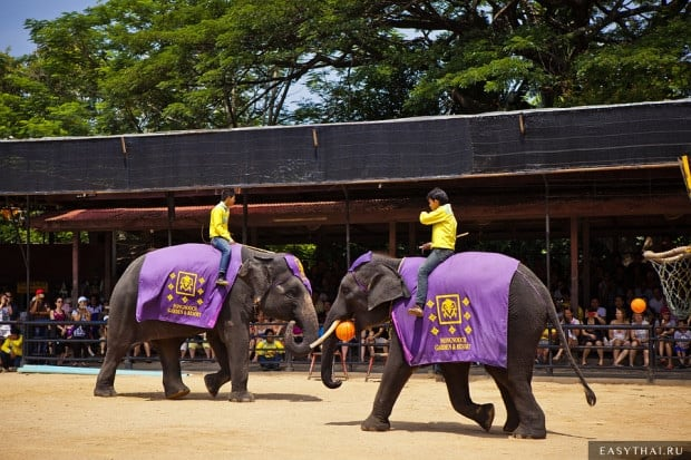 Шоу слонов в саду Нонг Нуч