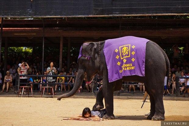 Шоу слонов в Паттайе
