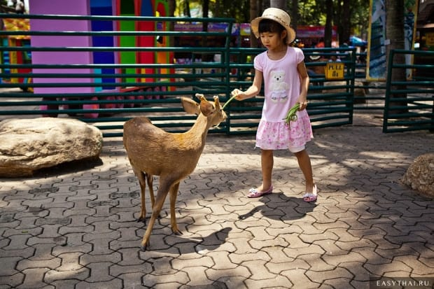 Тайская девочка кормит олененка