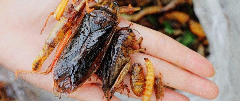 Как правильно есть насекомых в Таиланде