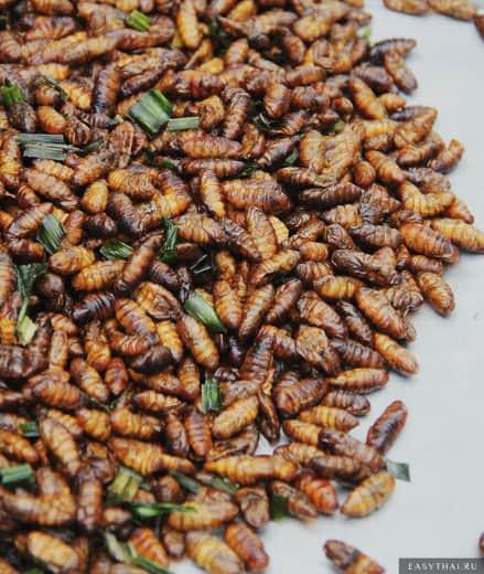 Коконы шелковичного червя