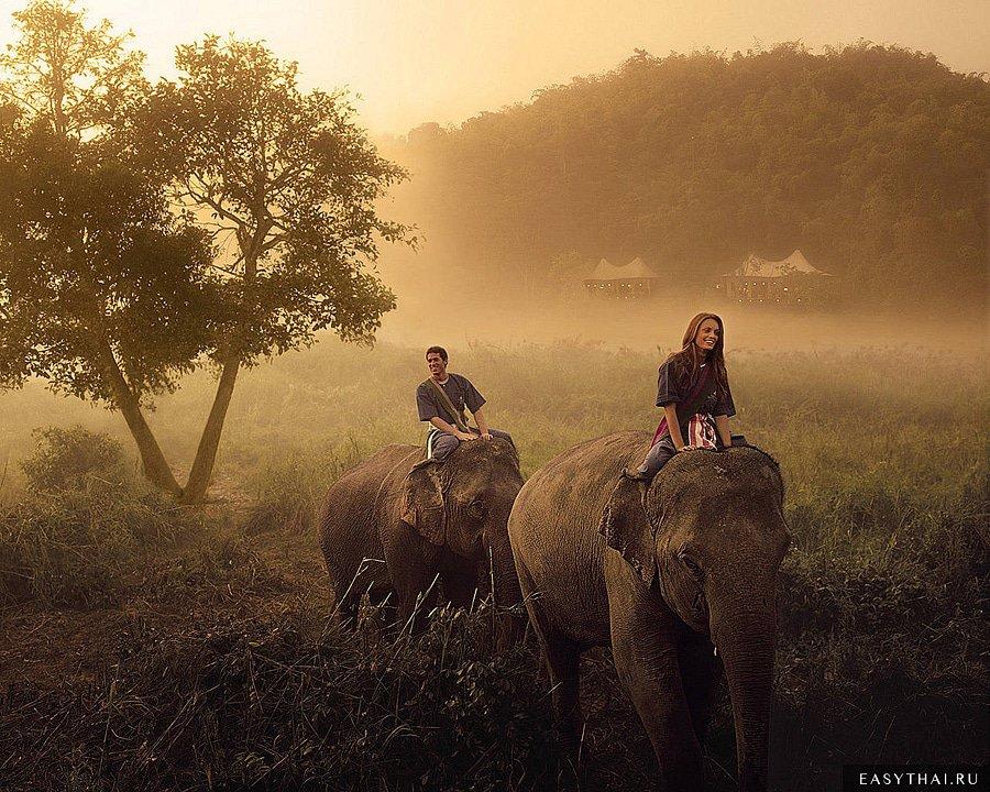 Путешествие по северному Таиланду на слонах