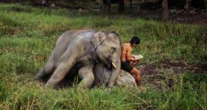Слоны – священный символ Таиланда