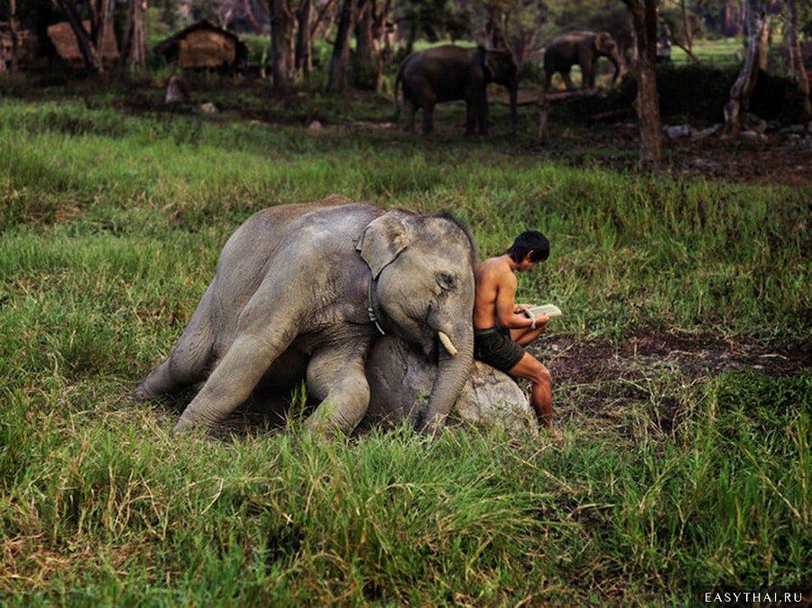 Человек и слон