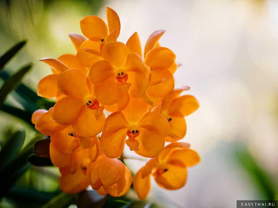 Улыбающиеся цветы