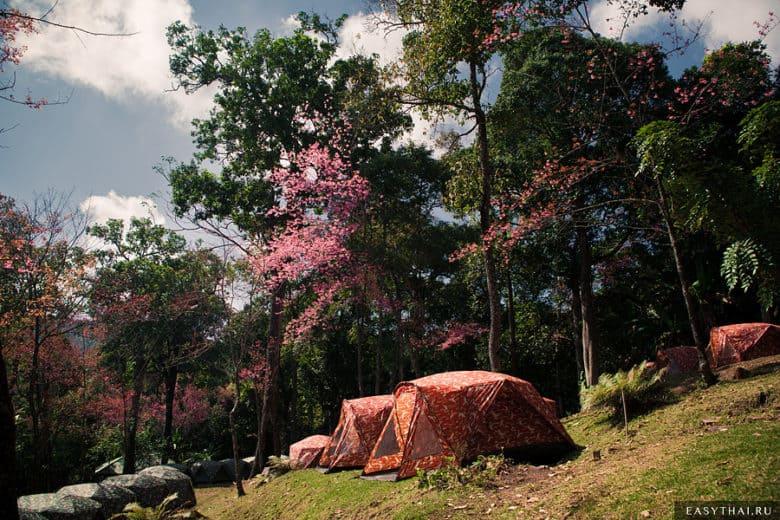Палатки на территории кемпинга