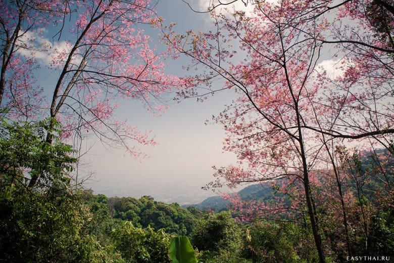 Вид на Чиангмай из палатки