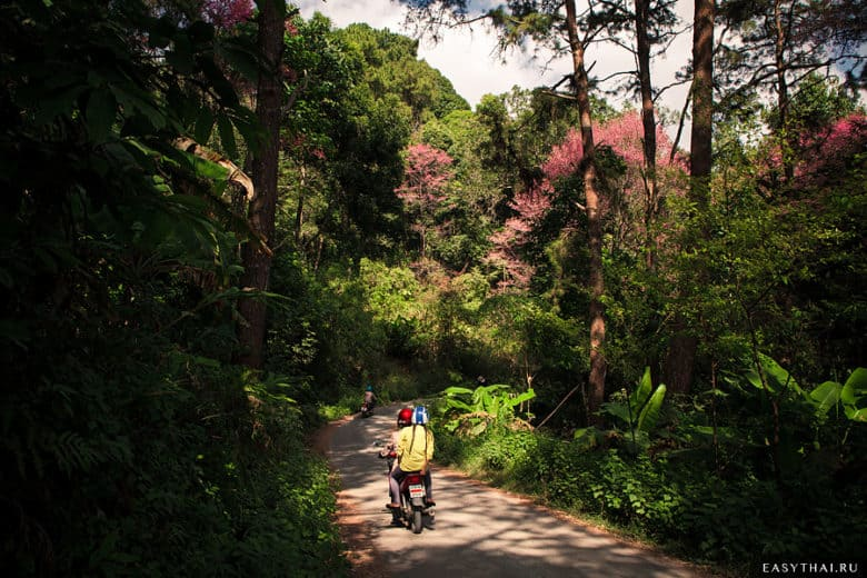 Дорога к Baan Khun Chang Kian