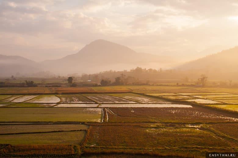 Рисовые поля на рассвете