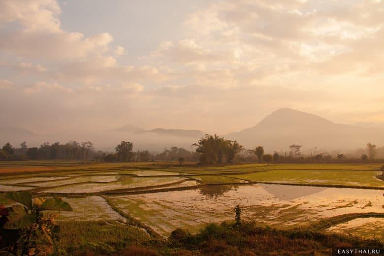 Рисовые поля в деревне