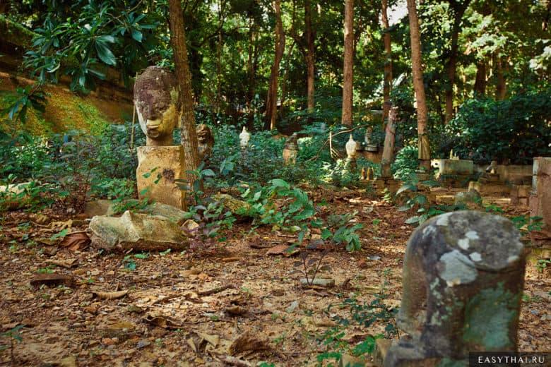 джунгли и руины