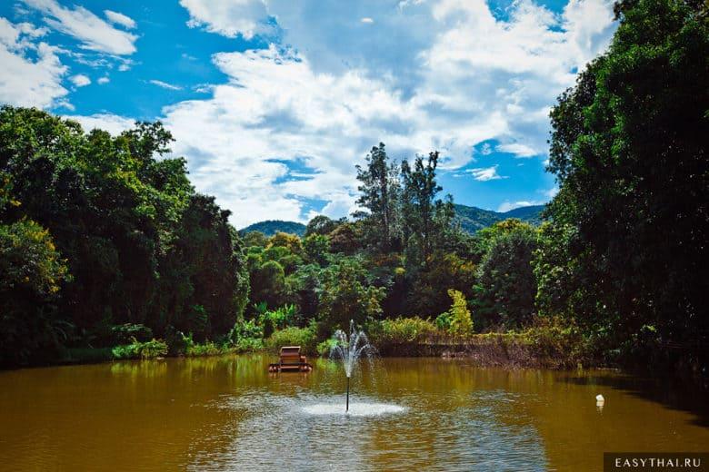 пруд с рыбами на территории храма Ват Умонг в Чиангмае