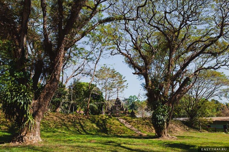 Деревья возле входа в пещеру Чианг Дао