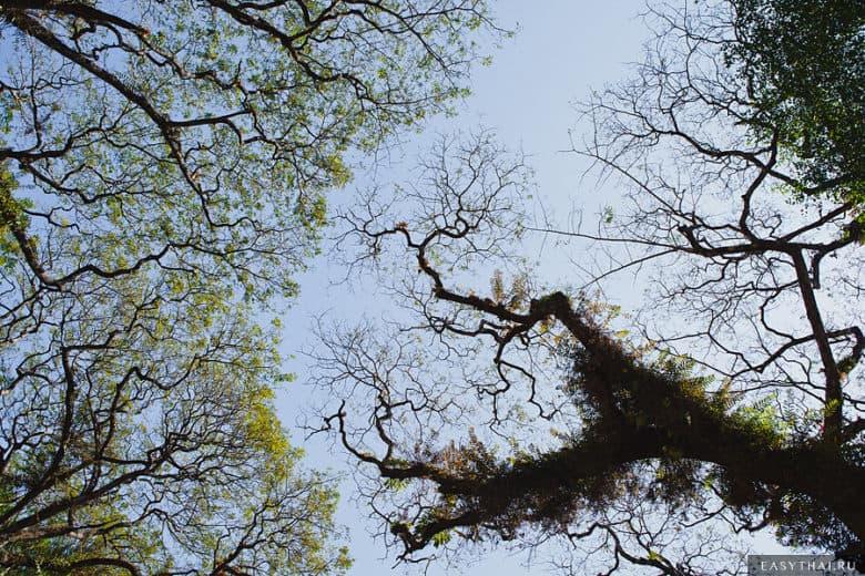 Кроны деревьев