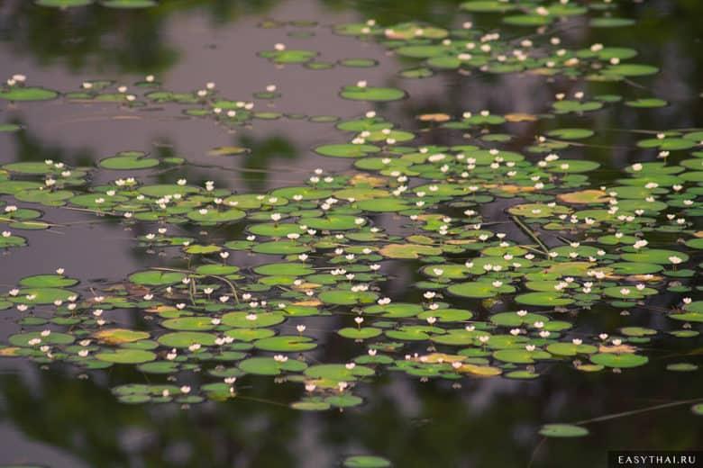 Небольшие цветы на озере