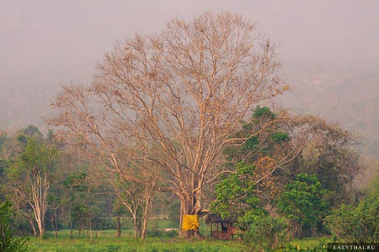 Старое дерево с домиком для духов