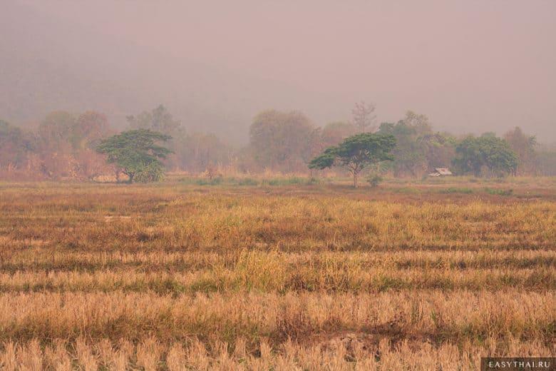 Высохшие рисовые поля