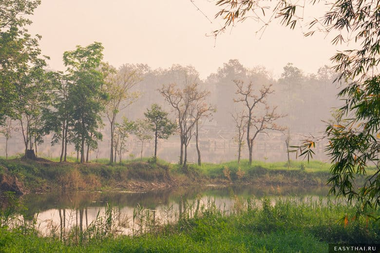 Сказочный лес у озера