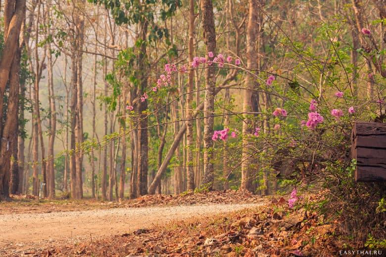 Цветущий куст в лесу