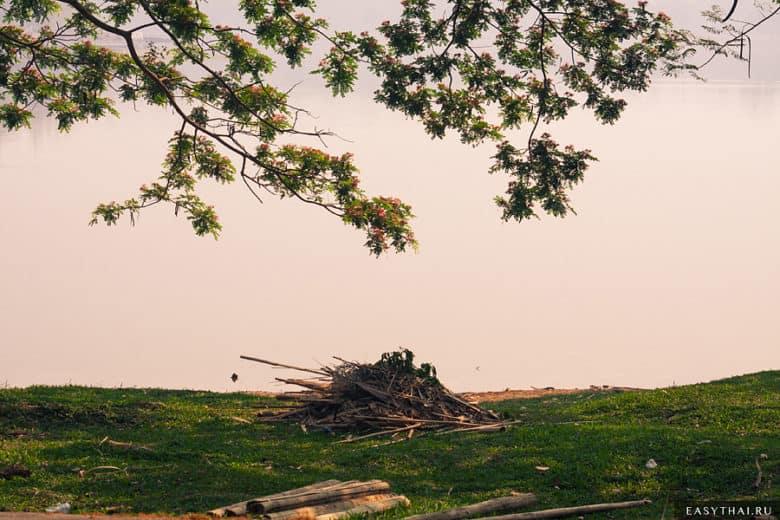 Ветки деревьев склоняются к воде