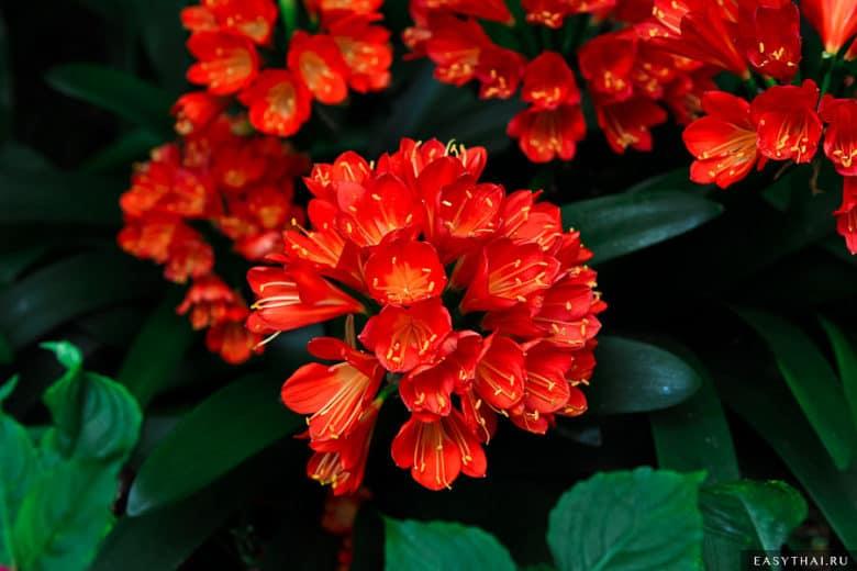 Цветы в королевской резиденции