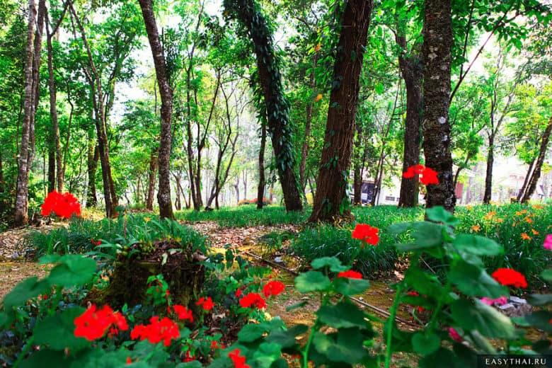 Лес в Пхубинг Пэлэс (Bhubing Palace)